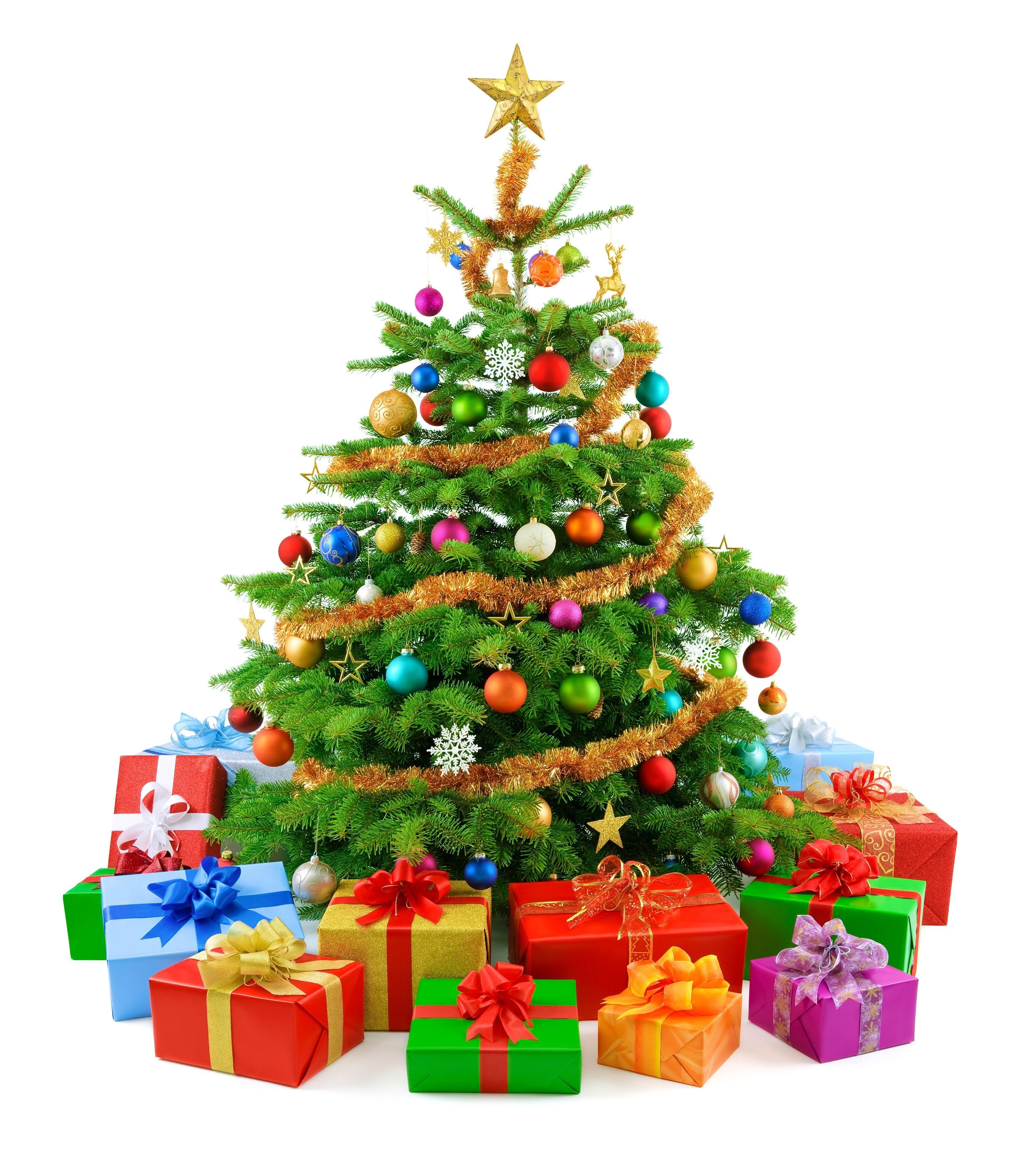 Community Christmas Trees thumbnail image.