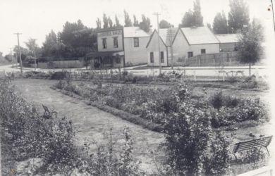 Scott Rose Garden